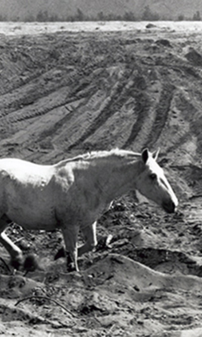 aq_block_1-Terrified Horse, Napa County, California, 1956, from Death of a Valley