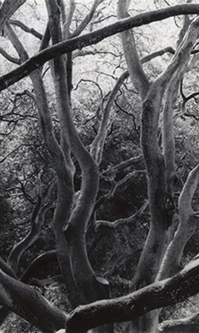 aq_block_1-Trees, Berkeley, California, 1957